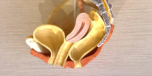 泌尿器科・骨盤指導